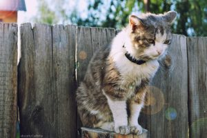 Symptoms and Sources of Your Pet's Allergies